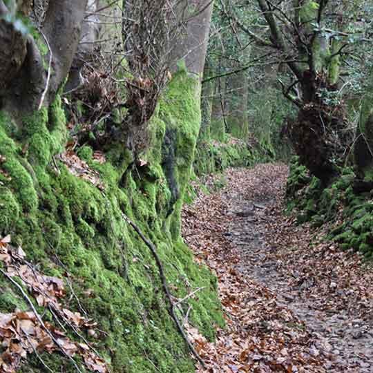 Angidy trail winding path on wye valley walk